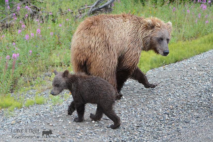 Like Momma Like Cub