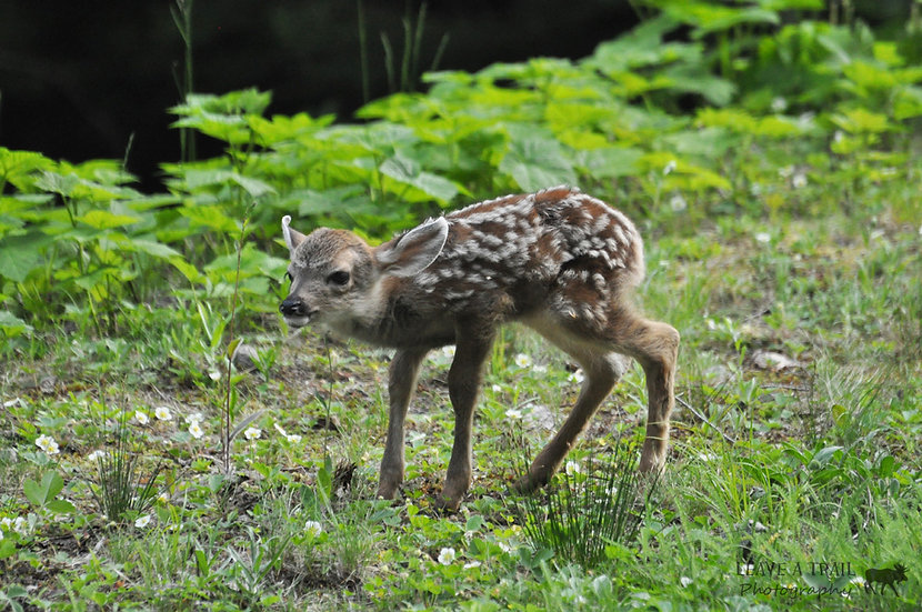 Baby Deer, I Love You!