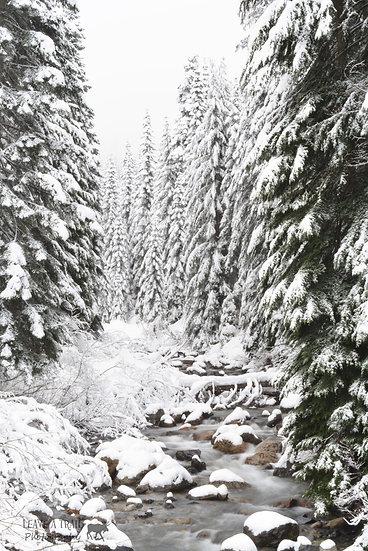 Snow Qualmie