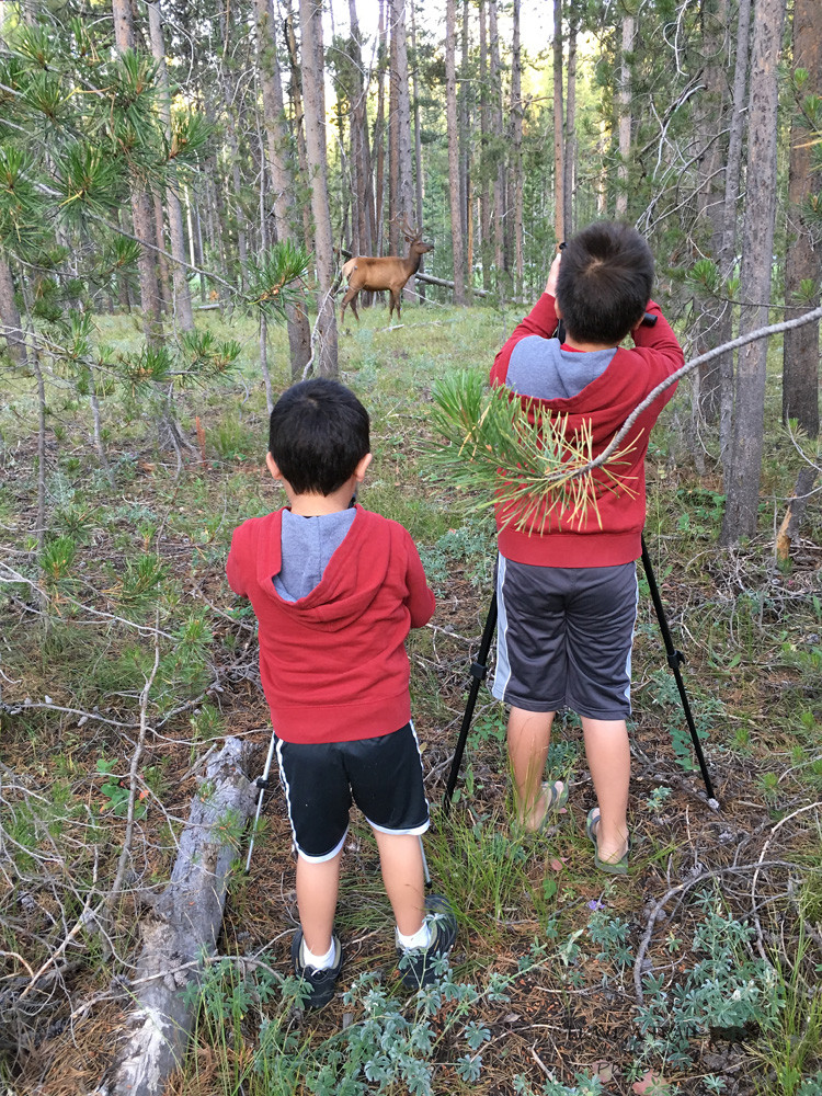 Tre and Ry Photographing an Elk - Grand Teton National Park, WY
