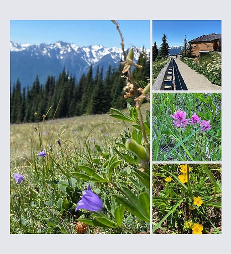 Wildflower Walk 2021 (3).jpg