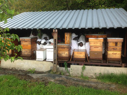 chez l'apiculteur
