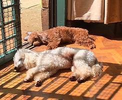 Dogs in a boarding kennel