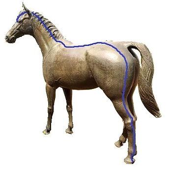 Blasenmeridian Pferd Dr. Isabell Herold Fachtierärztin für Akupunktur und Neuraltherapie
