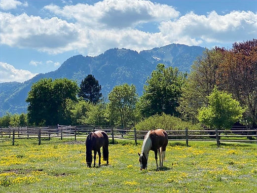 Pferdedentalzentrum der Tierärztlichen Gemeinschftspraxis Dr. Herold und Dr. Simon