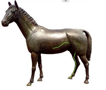 Lebermeridian Pferd Dr. Isabell Herold Fachtierärztin für Akupunktur und Neuraltherapie