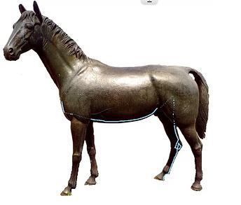 Nierenmeridian Pferd Dr. Isabell Herold Fachtierärztin für Akupunktur und Neuraltherapie