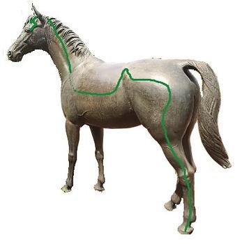 Gallenblasenmeridian Pferd Dr. Isabell Herold Fachtierärztin für Akupunktur und Neuraltherapie