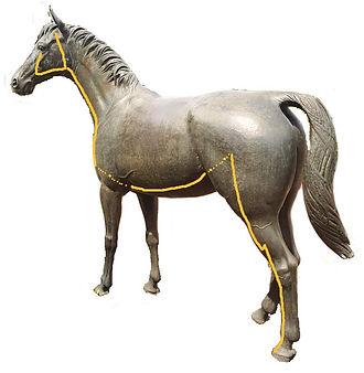 Magenmeridian Pferd Dr. Isabell Herold Fachtierärztin für Akupunktur und Neuraltherapie