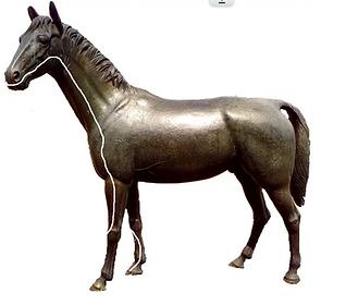 Dickdarmmeridian Pferd Dr. Isabell Herold Fachtierärztin für Akupunktur und Neuraltherapie