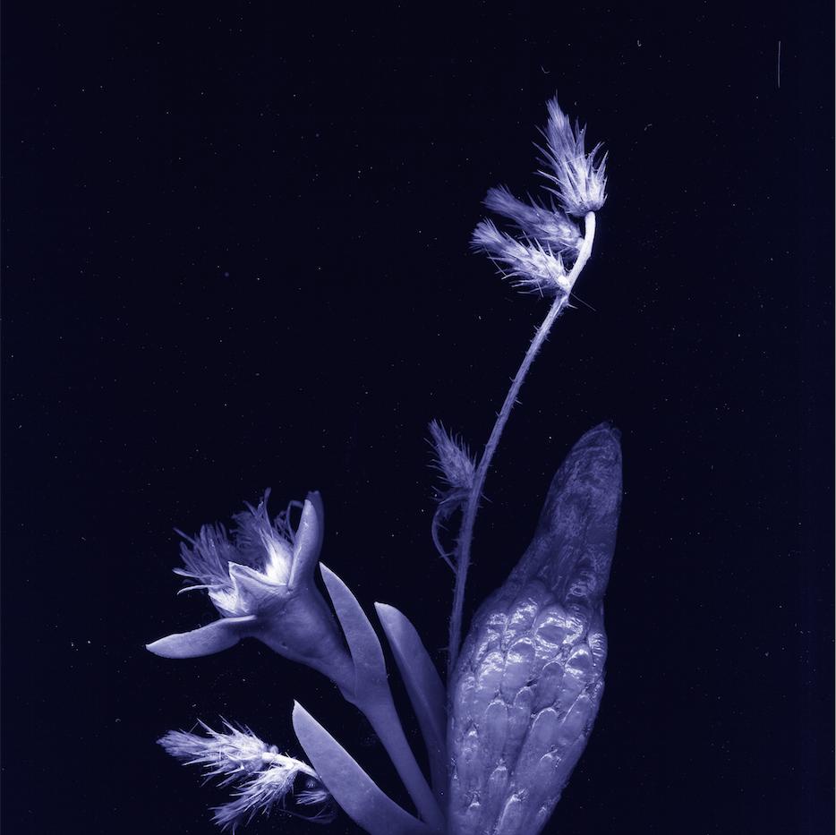 flores nativias .2