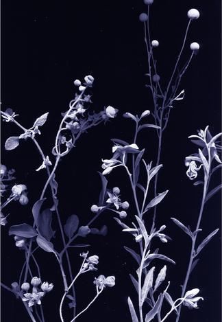 flores nativias .1