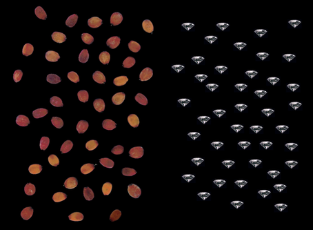 Carob Seeds and Diamonds - Myth or Fact