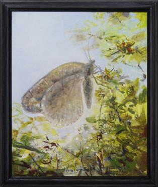 Sommerfugl / Butterfly (Moth)
