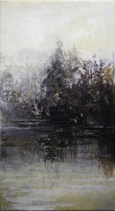 Grantre i tåkedis - Spruce in mist