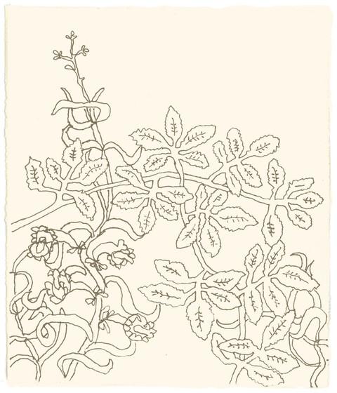 Ingen seder i Guds hage kunne måle seg med den, ingen sypress hadde slike greiner, ingen platan så rikt løvverk. Ikke noe tre i Guds hage  var så vakkert som den. Så vakker hadde jeg gjort den,  med en rikdom av greiner,  at alle Eden-trær i Guds hage var misunnelige på den. - Esekiel Kapittel  31