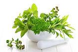 fresh herbs for herbal treatments