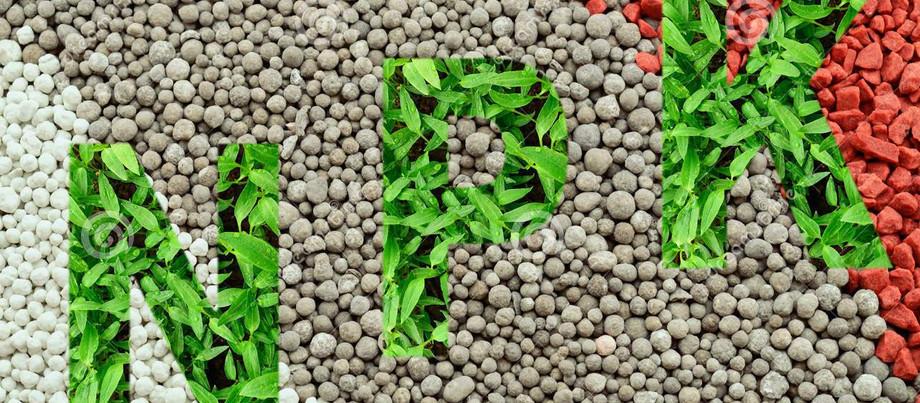 Листовые питательные обработки клубники