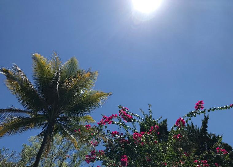 Caribbean skies