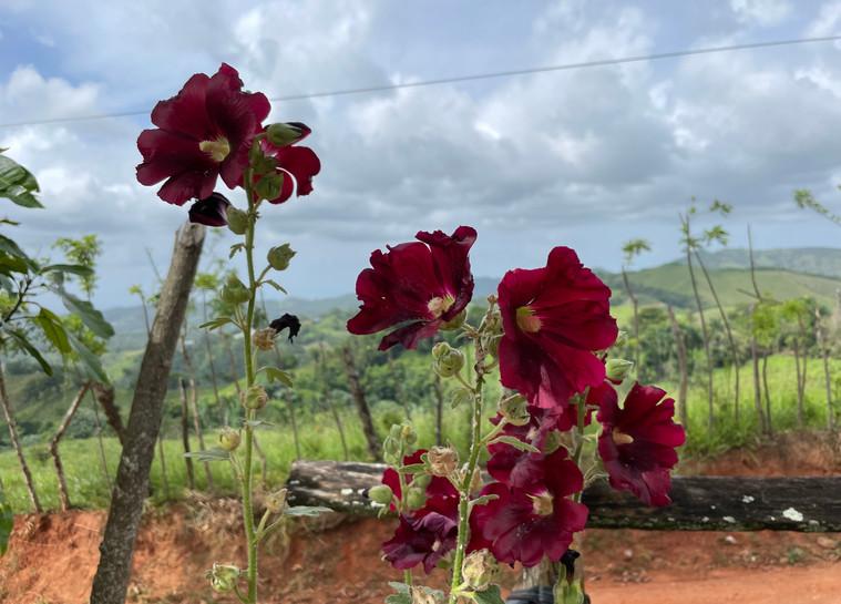 Sangre de Cristo flowers