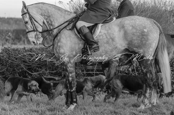 Horse & Hounds