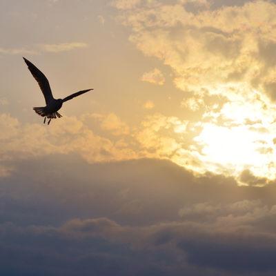 Sun between clouds and a bird flying..jp