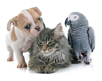 Dog'n Zen Pet Sitter