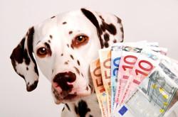 Tarifs prestation massage Dog'n Zen