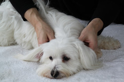 Massage Canin Tours - Dog'n Zen