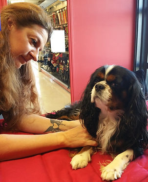 douleur articulaire chien