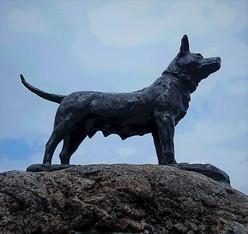 空を見上げる忠犬タマ公像