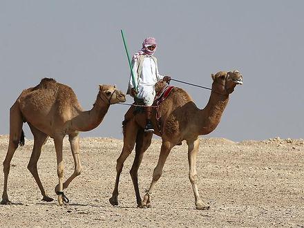 qatar-animal-racing-culture_d5e756b6-113