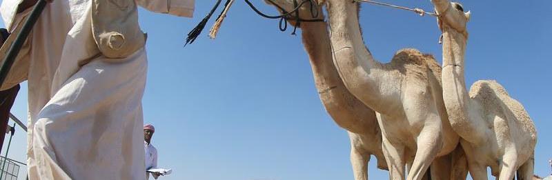 Camel ABEL®