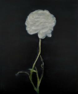 flower19_hi_res