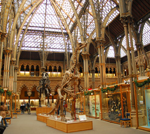 Oxford's Natural History Museum Reopens