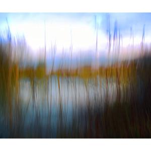 Dusky Reeds