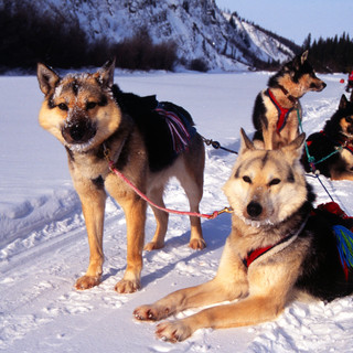 dogs last timber background.jpg
