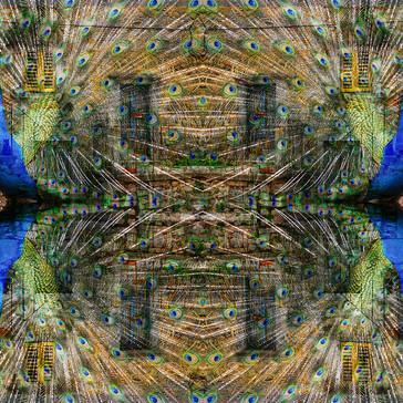 reflections (4).jpg