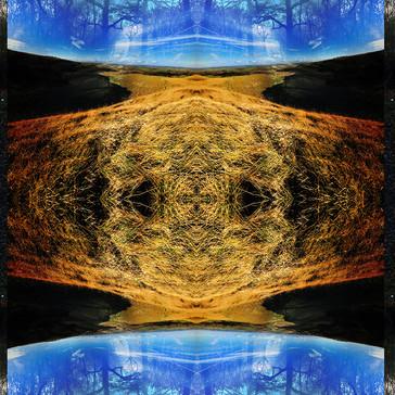 reflections (8).jpg