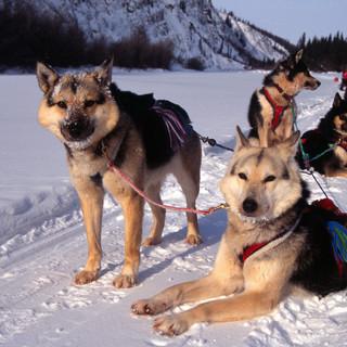 dogs+last+timber2.jpg