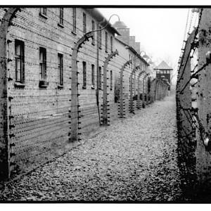 70th anniversary of the Auschwitz liberation