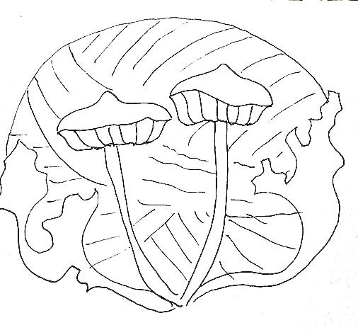Inspiration Drawing