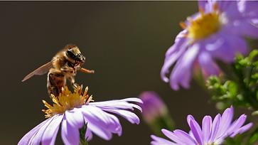 foto abejas 2.png