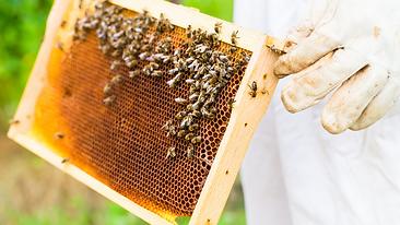foto abejas 1.png