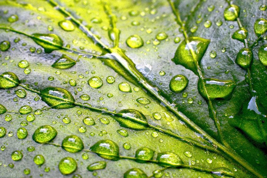 leaf-greenery-green-leaf-NRTP3EB.jpg