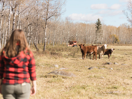 Visiting Ardmore | Edmonton Photographer