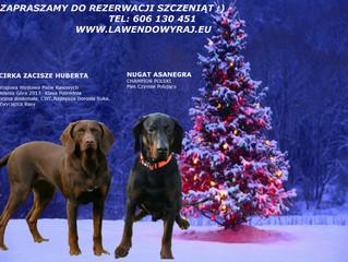 Nowe szczeniaki (Gończy Polski) z początkiem stycznia 2020 roku