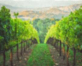 Wijn | Druivenstruiken | Wijnproeverij