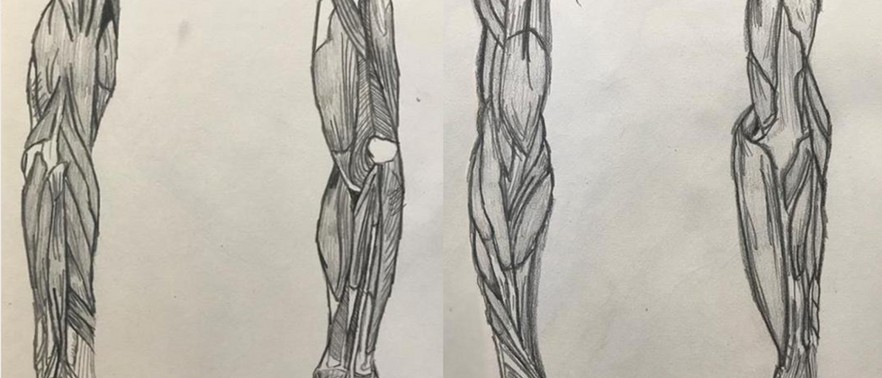 """Hannah Trostle, 2020 Graphite on paper 2x 14""""x11""""  Drawing III Figure Drawing Anatomy of the Arms Texas Tech University"""