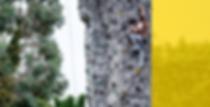 yellow image longer-03-03.png